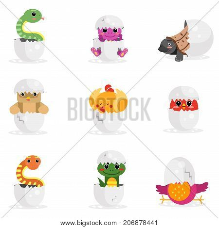 Cute newborn animal characters set, funny reptiles and birds in egg shell cartoon vector Illustration on a white background
