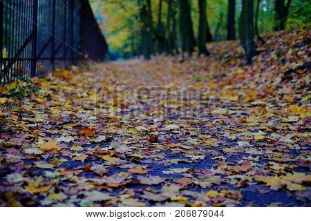 Park Path And Autumn Leaves