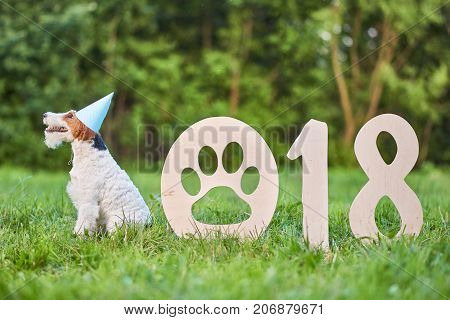 Shot of a healthy beautiful wire fox terrier dog sitting in the par wearing party hat resting near 2018 wooden numbers Chinese new year of the dog celebration greeting concept.