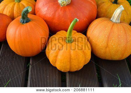 Closeup Of Various Pumpkins