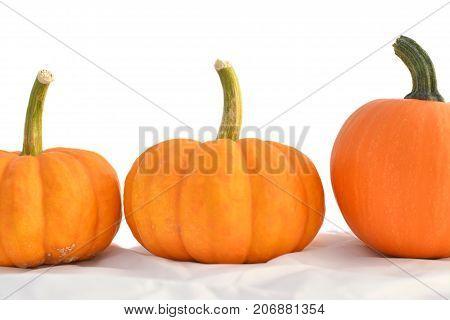 Three orange pumpkins with white background behind
