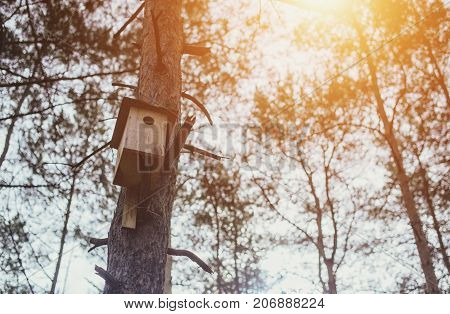 A Bird Houseon the tree in a forest