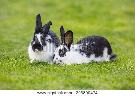 Rabbit. Cute Rabbit Bunny On The Lawn In The Garden