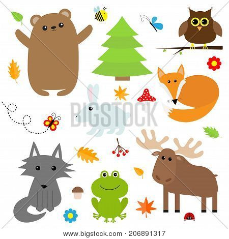 Forest animal insect set. Bear hare fox moose owl ladybug bee butterfly frog wolf fir tree leaf flower mushroom. Kids education cards. White background. Isolated. Flat design Vector illustration