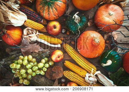 Thanksgiving day. Autumn fruit over wood.Thanksgiving autumn background