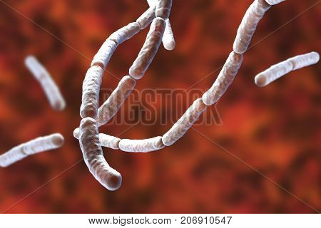 Bacillus subtilis, gram-positive bacteria, non-pathogenic for humans, used as fungicides on plants and in biotechnology for antibiotic production. 3D illustration