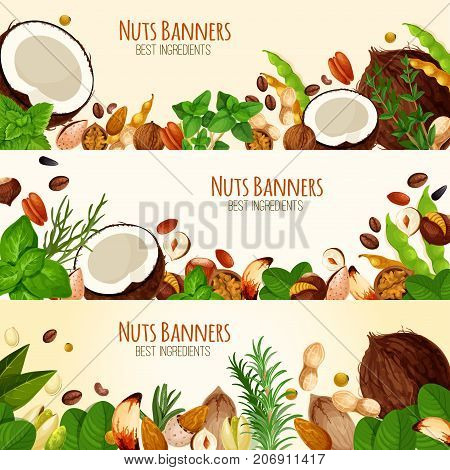 Nuts and fruit seeds banners. Vector set of coconut, walnut or peanut and hazelnut, almond nut or pistachio and bean legume pod, pumpkin or sunflower seeds and macadamia or filbert kernel nut