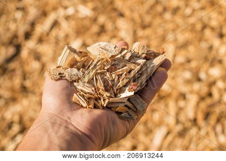 A Handful Of Dry Technological Wood Chips.