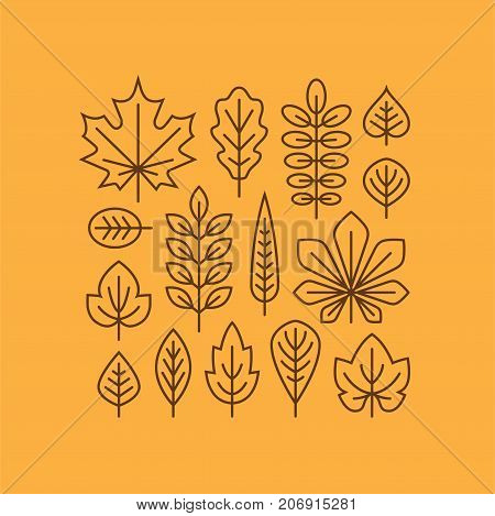 Autumn leaves line icons set isolated on orange background. Tree leaf logo symbol. Fall design element.