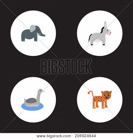 Flat Icons Waterbird, Panther, Jackass And Other Vector Elements