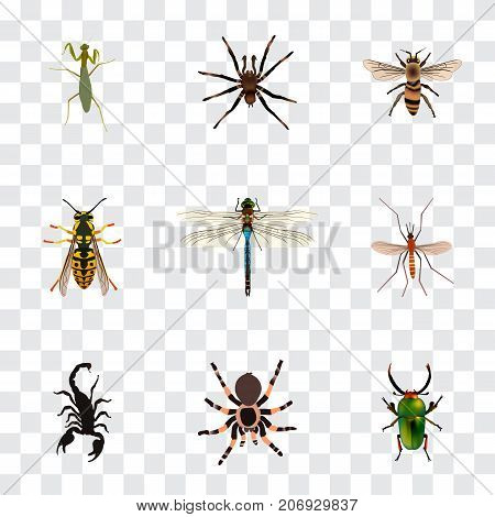 Realistic Tarantula, Insect, Gnat And Other Vector Elements