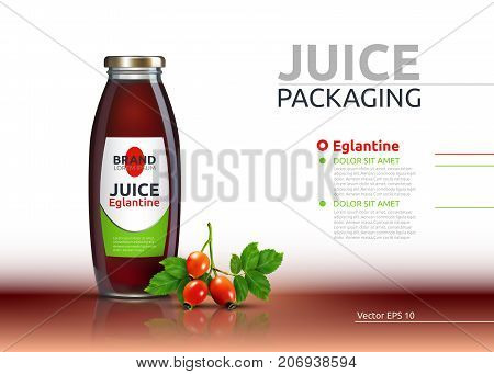 Dog rose, Rose hip or Eglantine drink. Juice realistic bottle Vector mock up. Brier Fruits drink glass bottle advertise templates. 3d detailed elements