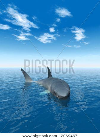 Shark_Alone