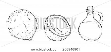 coconut and Coconut oil hand drawn vector line art illustration
