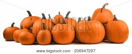 Many orange pumpkins isolated on white background, Halloween concept