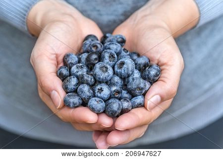 Blueberries Blue Berries Fruits Fresh Presented In Woman Hands With Soft Vivid Colors Close Up Detai