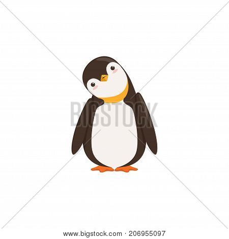 The picture shows a penguin who is tilting his head on a white background.
