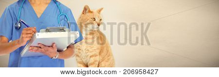 Veterinarian doctor with cat in veterinary clinic.