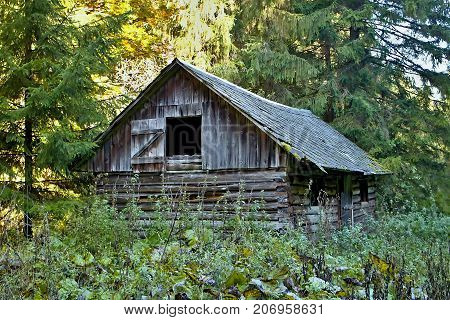 Ruzomberok - Cernova collapsed old hut in Cutkovska valley. A tradicional dwelling in the forest. Wooden house.