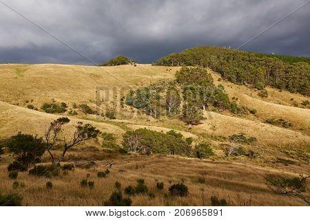 Framland and woods in Tasmania, Australia