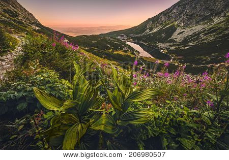 Mountain Lake at Sunset with Flowers and Hiking Trail in Foreground. Velicke Tarn High Tatras Slovakia.