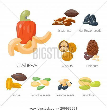 Piles of different nuts pistachio hazelnut almond, peanut, walnut, cashew chestnut cedar nut and brazil tasty seed vector illustration. Organic collection nutshell group assortment.