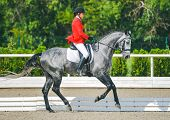 Young elegant rider woman and gray horse, dressage test on equestrian competition. Advanced Dressage test. Horse with girl at dressage equestrian sports competitions. Details of equestrian equipment. poster