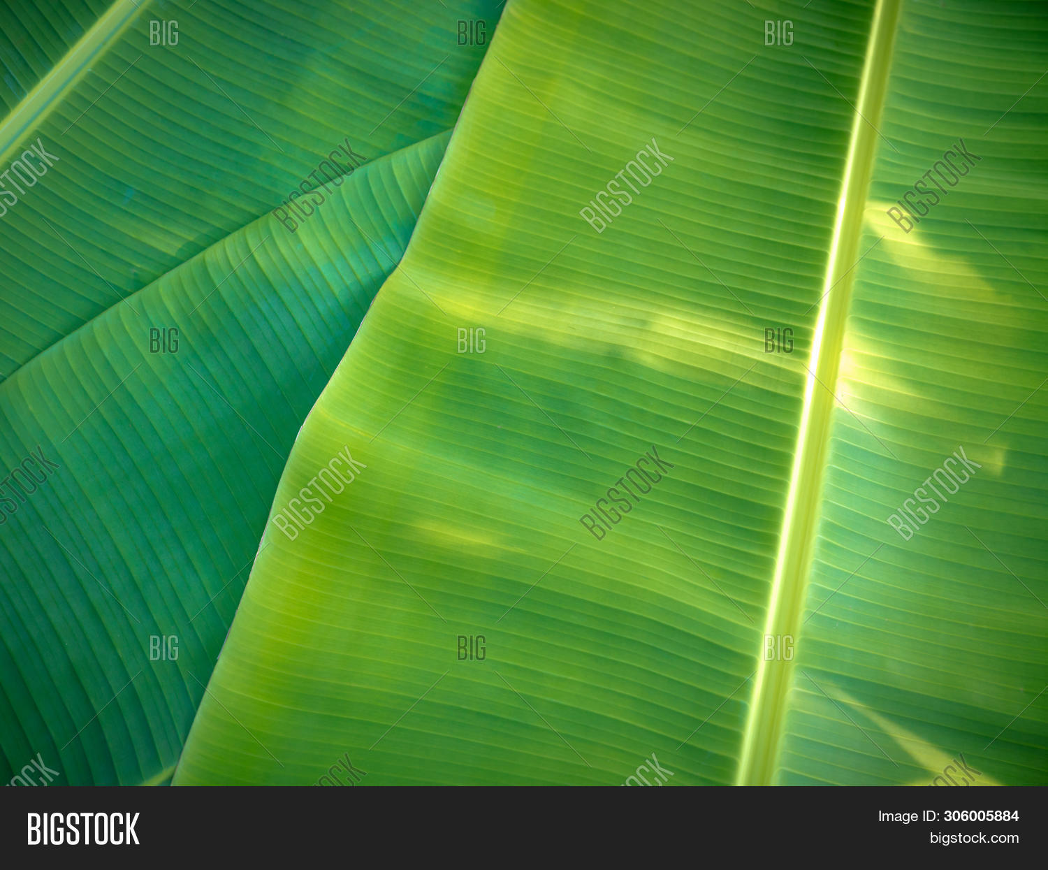 Tropical Banana Leaves Image Photo Free Trial Bigstock Diy your dining table,home,bedroom,bookshelves,cabinets by these tropical leaves,create an authentic tropical. bigstock