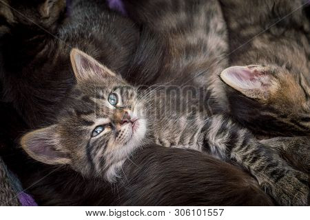 Group Of Little Tabby Cats Resting Together At Home.
