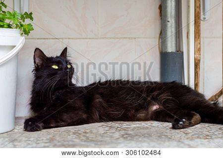 Beautiful Young Black Cat With Green Eyes Lying On The Floor Contentedly In The Balcony.