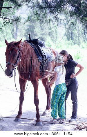 The Instructor Helps The Girl To Saddle A Brown Horse In The Forest. Childrens Equestrian Camp. Summ
