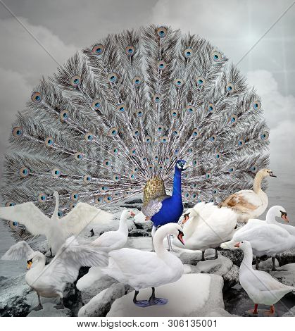 Stand Out Of The Crowd Series - The Blue Peacock - 3d Illustration