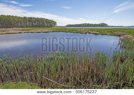 Forest, Wetland Marsh, And Spring Growth In The Marsh Grass In Blackwater National Wildlife Refuge I