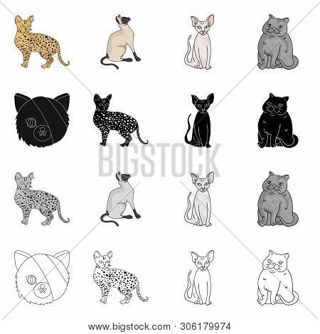 Vector Illustration Of Pet And Sphynx Icon. Collection Of Pet And Fun Stock Symbol For Web.