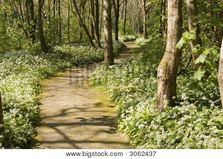 Path In Forest With White Flowers