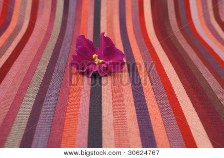 Violet flower on a striped background