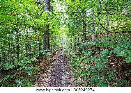 way in forest, natural landscape