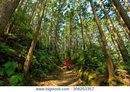 Asian woman in red coat, trekking in the Kumano Kodo forest, Japan