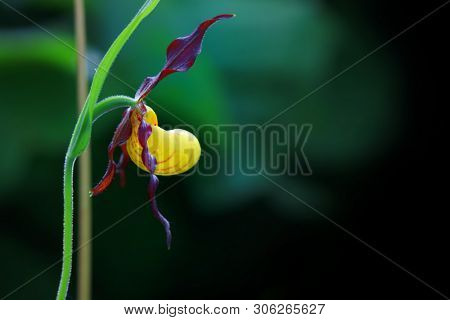 Wild orchid flower in the garden