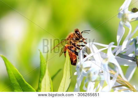 Close up shot of a bee on a  flower