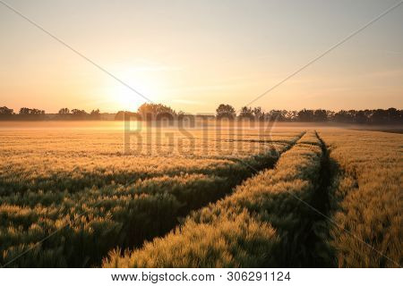 Sunrise over field wheat Nature landscape Nature background Colors vibrant tranquil Nature background mist fog Nature background Grain Cereal Field dawn morning Nature background Outdoor trees sunrise sun Nature background Sun sunbeams Nature background.