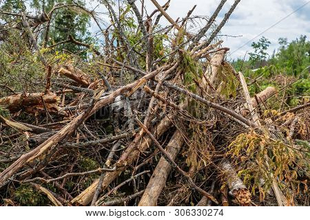 Blockage Old Trees Pine Spruce Chaotic Pile Cleaning The Forest Preparation For Construction