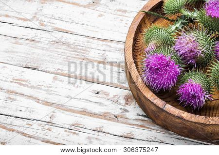Milk Thistle With Flowers