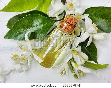 Neroli (citrus Aurantium) Essential Oil In Bottle. Fresh White Flowers, Green Leaf & Neroli Essentia