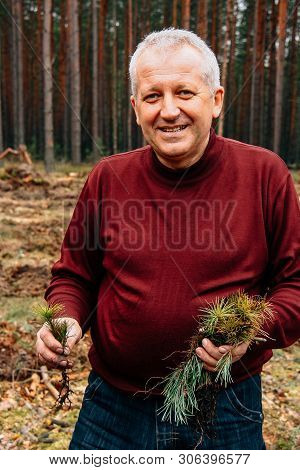 Gorodok, Volyn / Ukraine - April 01 2011: Man With A Pine Saplings At Area For Afforestation
