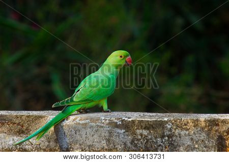Portrait Of A Beautiful Parrot On The Wall Against A Soft Blurry Background