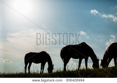 Wild horses range the meadow. Summer time poster