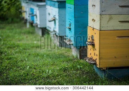 Background With Beehives. Close Up Of Flying Bees. Wooden Beehive And Bees. Plenty Of Bees At The En