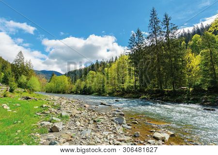 River Flows Among Of A Green Forest At The Foot Of The Mountain. Picturesque Nature Of Carpathians