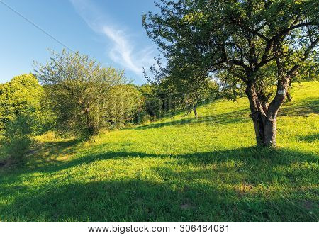 Abandoned Orchard On The Hillside. Rural Scenery In Evening Light